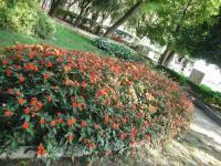 Fiori - Flower